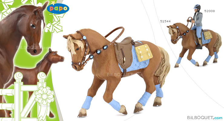 Young rider's horse Papo