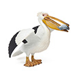 Pelican - Sea Bird Papo