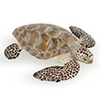 Sea Turtle Caouanne - Sea Figurines