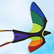 Bonny Bird Single-line Kite 130x75cm Wolkenstürmer