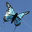 Butterfly Kite BLUE - Single-line for kids Wolkenstürmer